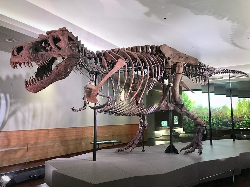 Sue the T-rex in the Field Museum of Natural History, Chicago, Illinois